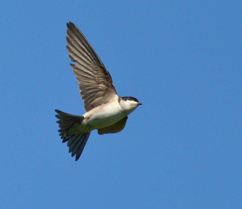 Hussvala 4 | Möten med fåglar